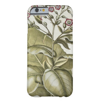 Tobacco plant, from the 'Hortus Eystettensis' by B Barely There iPhone 6 Case