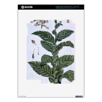 Tobacco plant, plate 7, from 'Collection Precieuse iPad 3 Skins