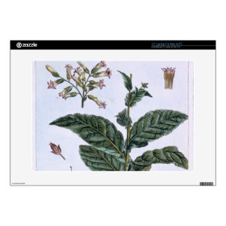 Tobacco plant, plate 7, from 'Collection Precieuse Laptop Decals