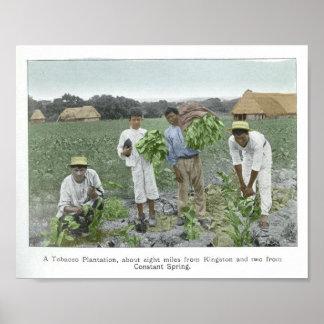 Tobacco plantation posters