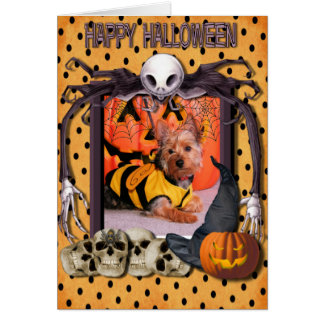 Tobey - Silky Terrier Greeting Card