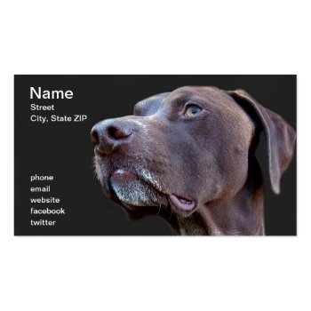 German Shorthaired Pointer Dog Breeder Business Card Template