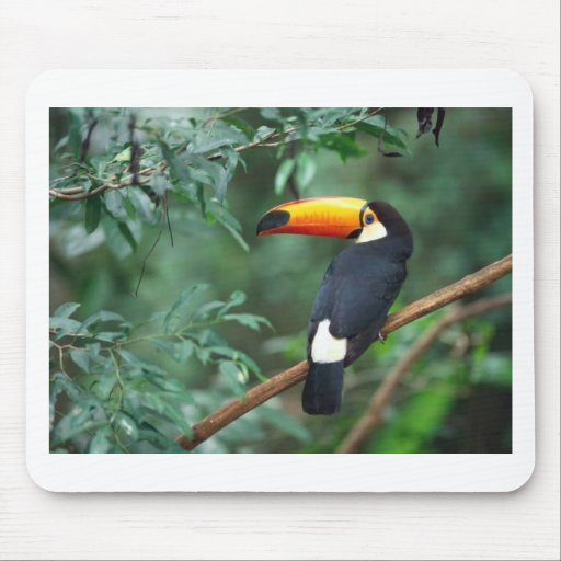 Toco Toucan Mouse Pad