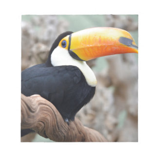 Toco toucan on branch note pad