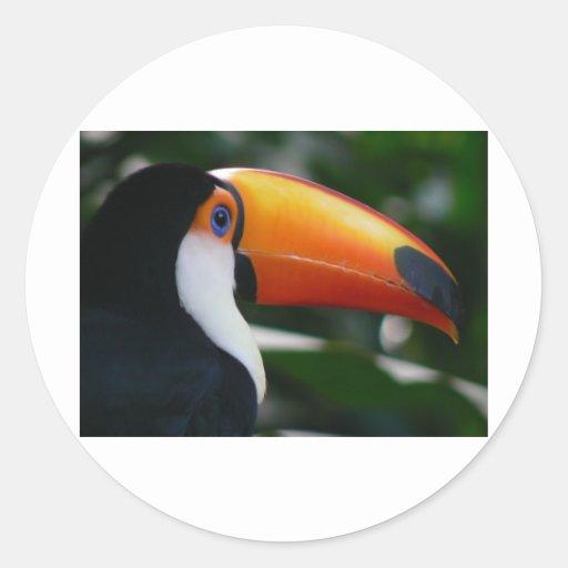 Toco_toucan_Parque_das_Aves Pegatina Redonda