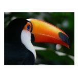 Toco_toucan_Parque_das_Aves Postcard