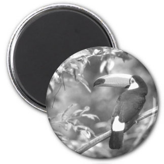 TOCO TOUCAN PHOTO BLACK AND WHITE 2 INCH ROUND MAGNET
