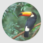 TOCO TOUCAN PHOTO FULL COLOR CLASSIC ROUND STICKER