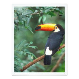TOCO TOUCAN PHOTO FULL COLOR 4.25X5.5 PAPER INVITATION CARD