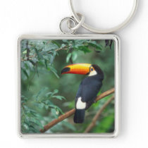 TOCO TOUCAN PHOTO FULL COLOR KEY CHAINS