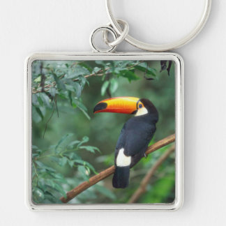 TOCO TOUCAN PHOTO FULL COLOR KEYCHAIN