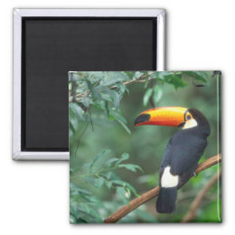 TOCO TOUCAN PHOTO FULL COLOR MAGNET