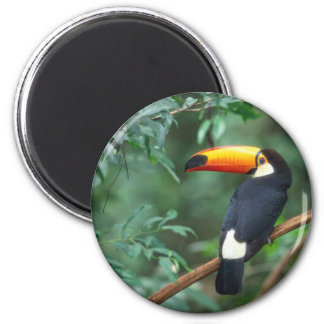 TOCO TOUCAN PHOTO FULL COLOR 2 INCH ROUND MAGNET