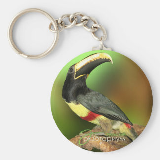 Toco Toucan photo phull color. Keychain