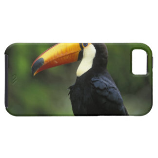 Toco Toucan, (Ramphastos toco), Iguacu National iPhone SE/5/5s Case