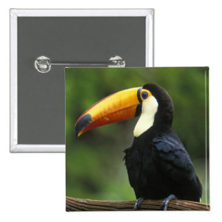 Toco Toucan, (Ramphastos toco), Iguacu National Pinback Button