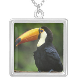 Toco Toucan, (Ramphastos toco), Iguacu National Silver Plated Necklace