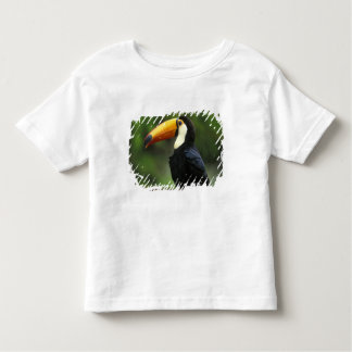 Toco Toucan, (Ramphastos toco), Iguacu National Tee Shirt