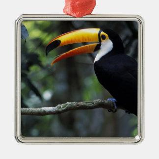 Toco Toucan (Ramphastos toco), Iguazu Falls, Ornament