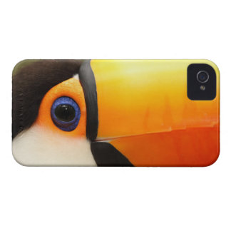 Toco Toucan (Ramphastos toco) is the largest iPhone 4 Case-Mate Case