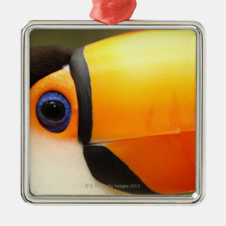 Toco Toucan (Ramphastos toco) is the largest Metal Ornament