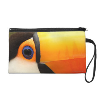 Toco Toucan (Ramphastos toco) is the largest Wristlet Purse