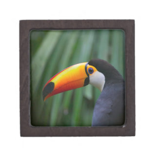 Toco Toucan (South America), Panama Gift Box