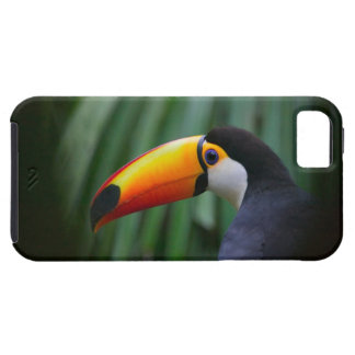 Toco Toucan (South America), Panama iPhone 5 Cases