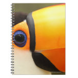 Toco Toucan (toco de Ramphastos) es el más grande Cuaderno