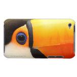 Toco Toucan (toco de Ramphastos) es el más grande Case-Mate iPod Touch Cobertura