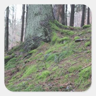 Tocón de árbol cubierto de musgo pegatina cuadrada