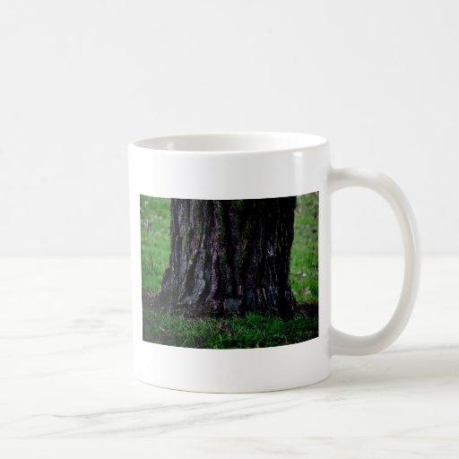 Tocón de árbol tazas