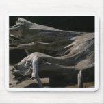 Tocón del Driftwood Alfombrillas De Raton