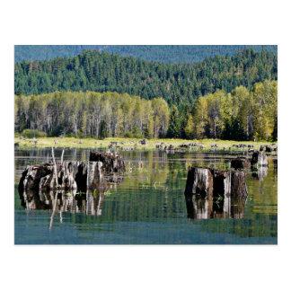 Tocones de árbol expuestos en el lago postal