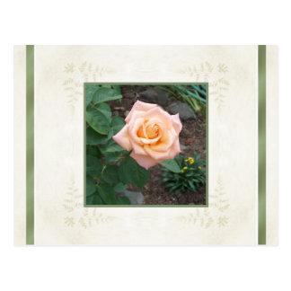 Toda la ocasión carda el jardín rosado del ~ subió tarjetas postales