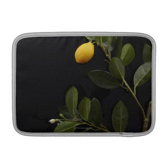 Todavía limones en su rama fundas macbook air