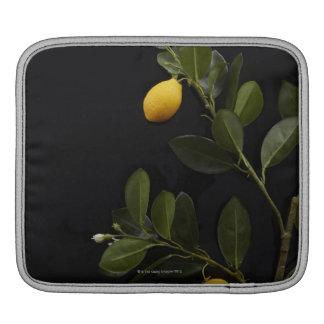 Todavía limones en su rama fundas para iPads