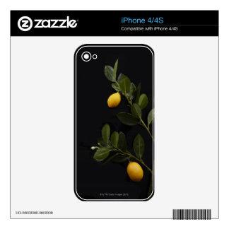 Todavía limones en su rama skins para eliPhone 4S