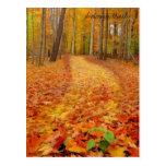 Todavía verde, rastros del otoño postal