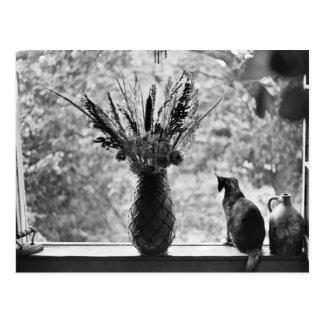 Todavía vida con el gato postal