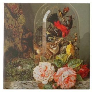 Todavía vida con el pájaro del tarareo en una bóve azulejo cuadrado grande
