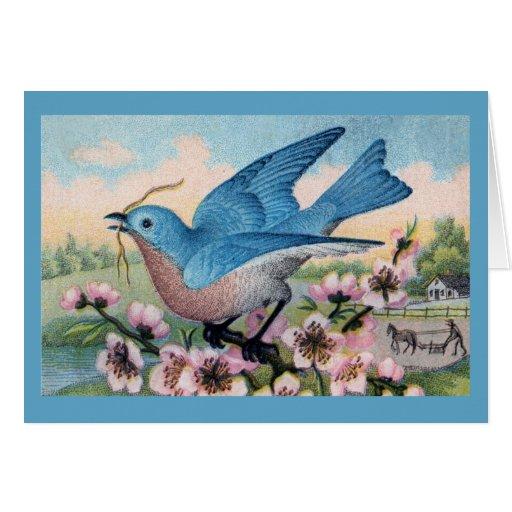 Todo el Bluebird de la ocasión le agradece observa