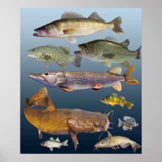 todo el pescado póster