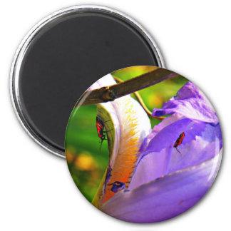 Todos en los detalles - iris e insectos imán redondo 5 cm
