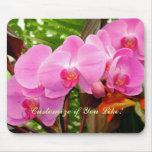 Todos en una orquídea magenta magnífica de la fila alfombrillas de ratones
