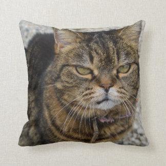 Todos los gatos son gatos gruñones almohadas