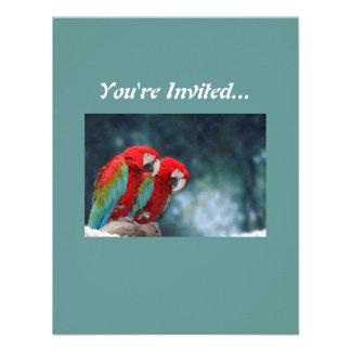 Todos ocasionan loros coloridos invitacion personalizada