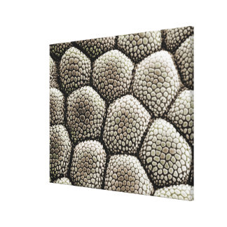 Toe pad epidermis of a Toad Stretched Canvas Prints