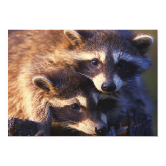 Together Forever Raccoons 5x7 Paper Invitation Card