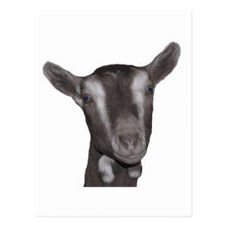 Toggenburg Goat Postcard